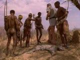 3 of 8 - / Жизнь животных - Плотоядные: Леопард /The Wildlife Specials: Leopard/ 1999